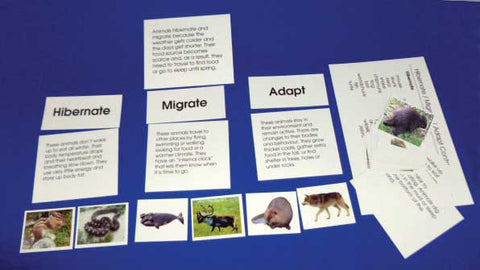 Hibernate/Migrate/Adapt - M&M Montessori Materials