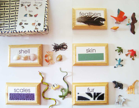 Animal Coverings - Introductory - M&M Montessori Materials