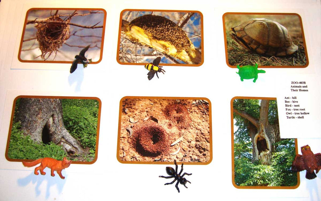 Animals and Their Homes – Montessori Materials by Lakeview