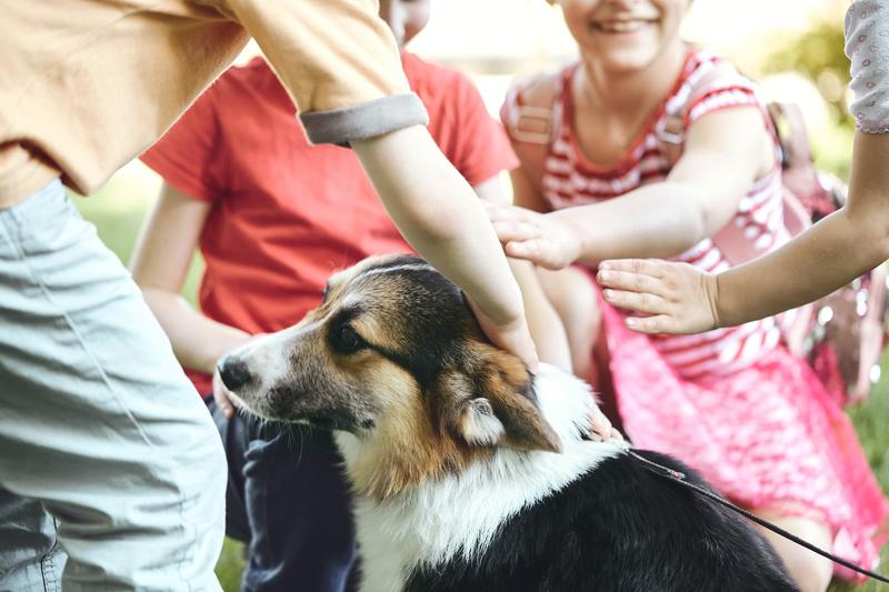 What to Keep in Mind When Considering Getting Your Children a Pet