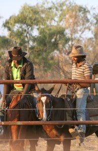 Borroloola camp draft and rodeo.