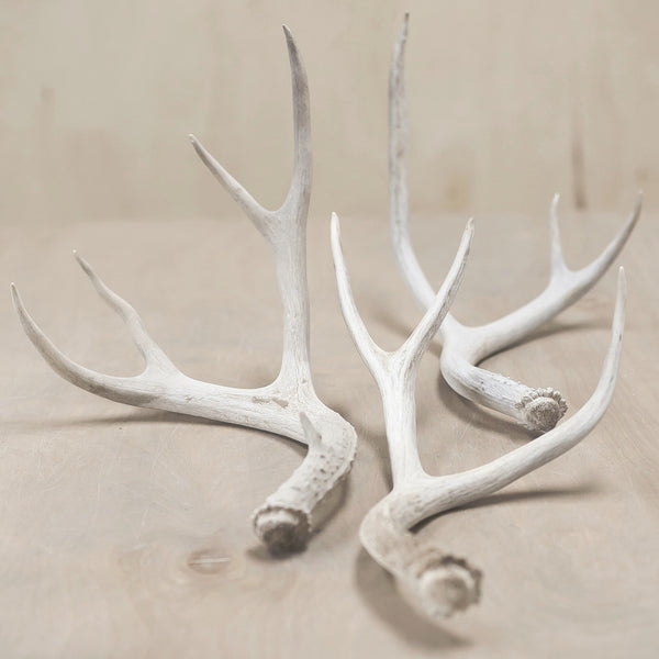 Small Antlers
