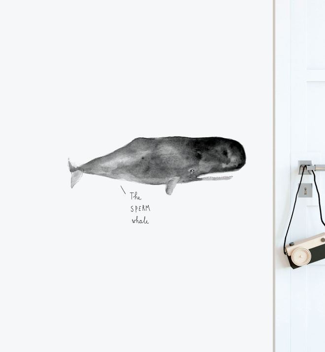 The Sperm Whale Wall Sticker Decal