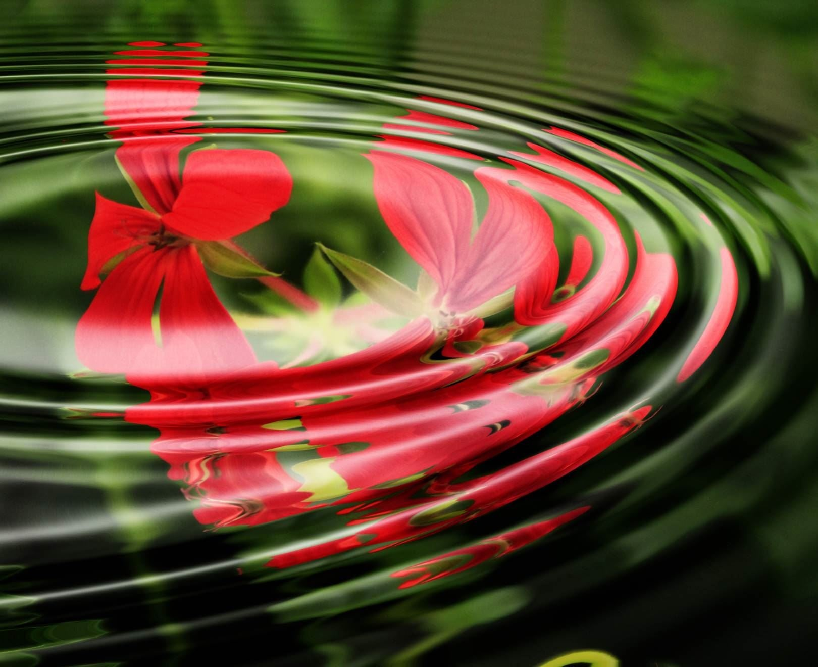 Red Flower In Ripples