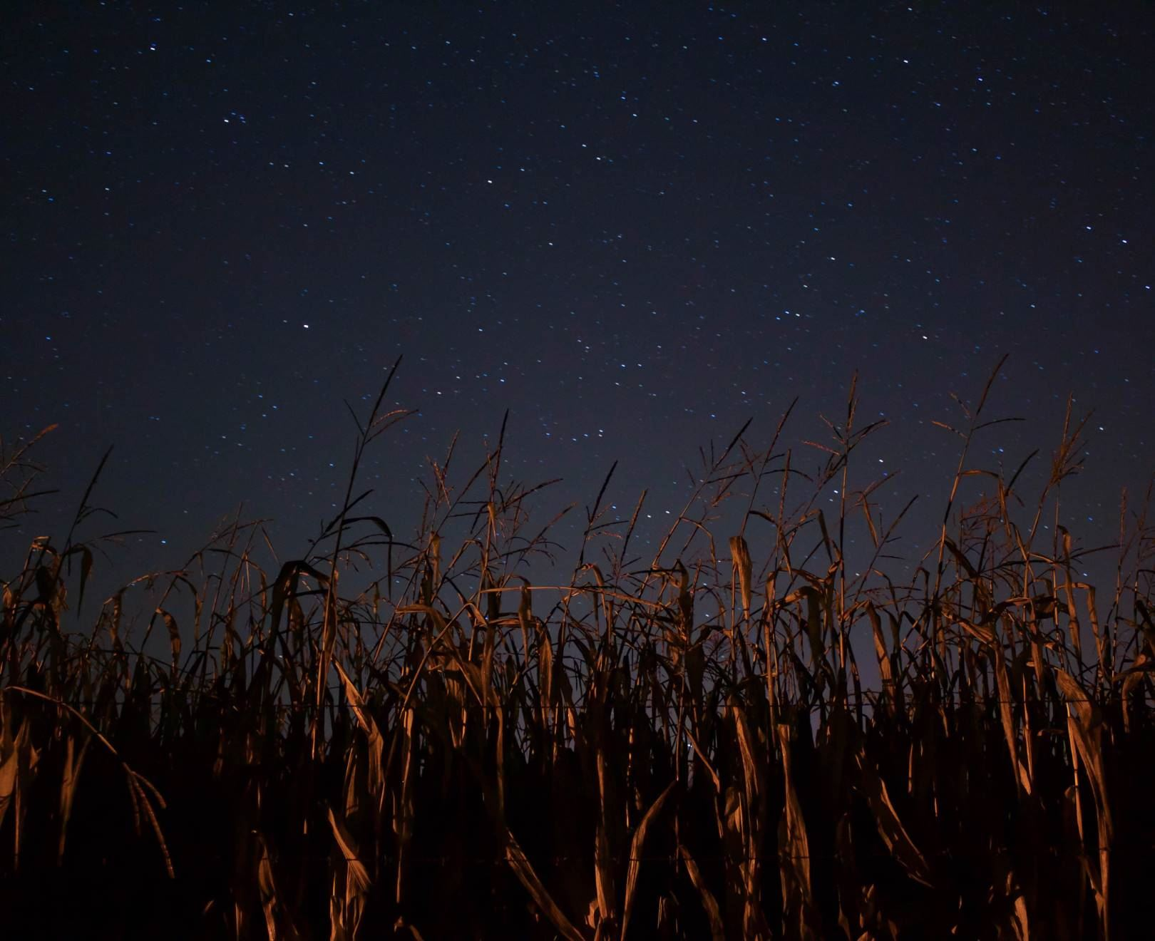 Wheat Under Night Sky