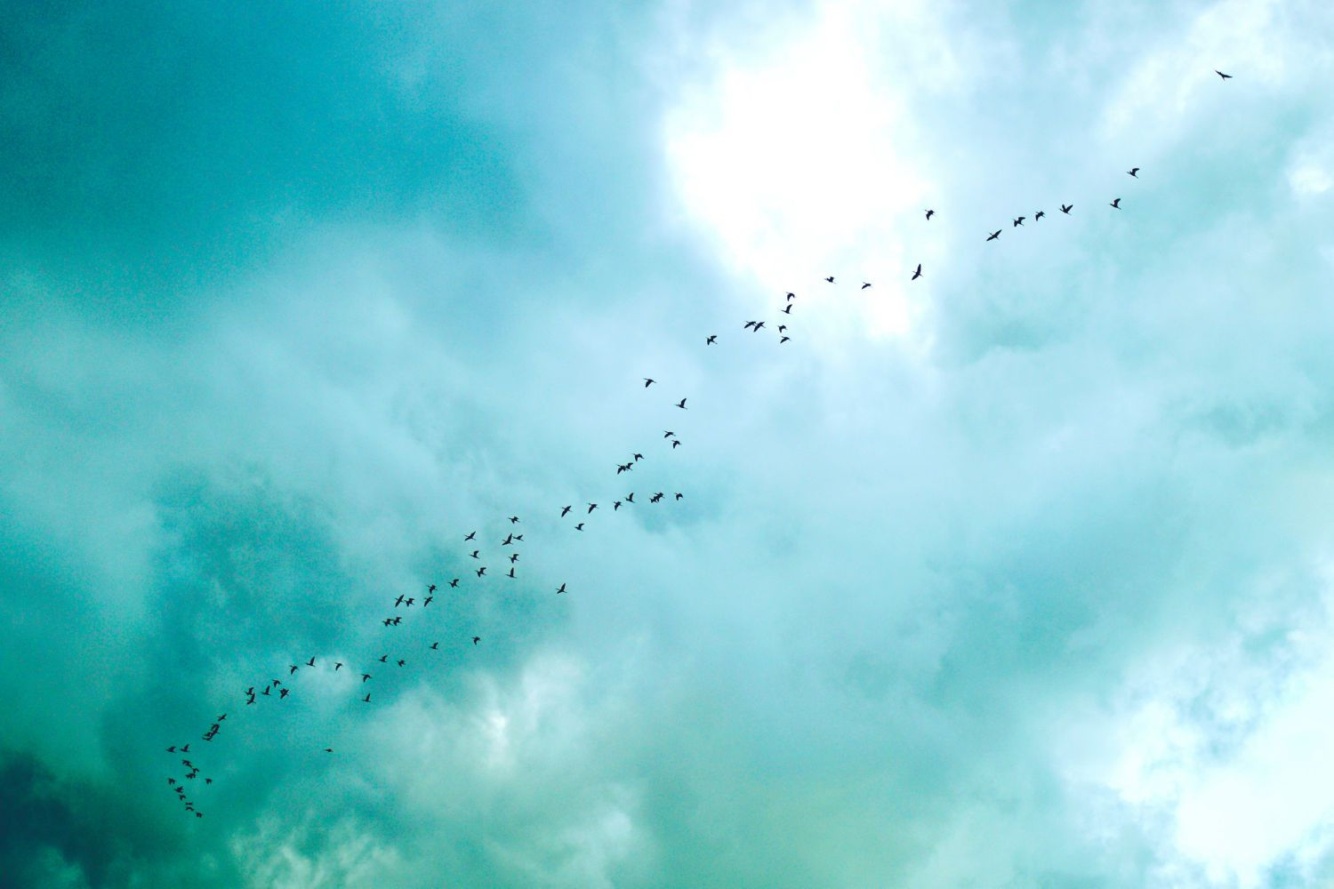 Birds Flying in a Blue Sky Canvas
