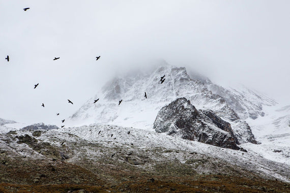 Bird flock near a snowy mountain Canvas