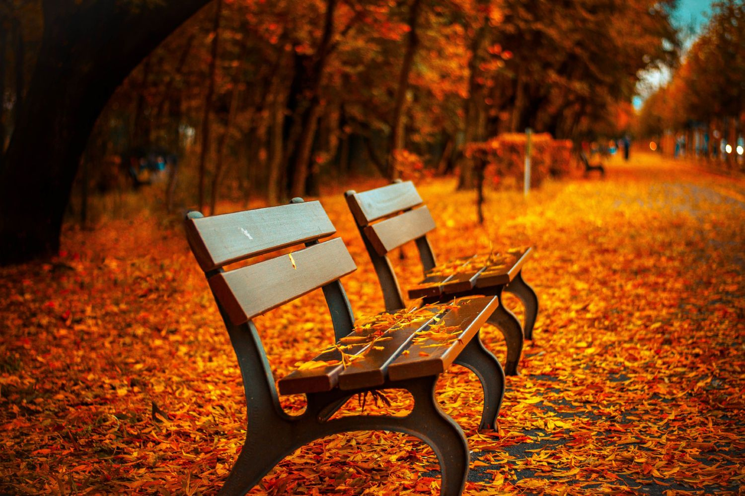 Autumn leaves on the benches Canvas