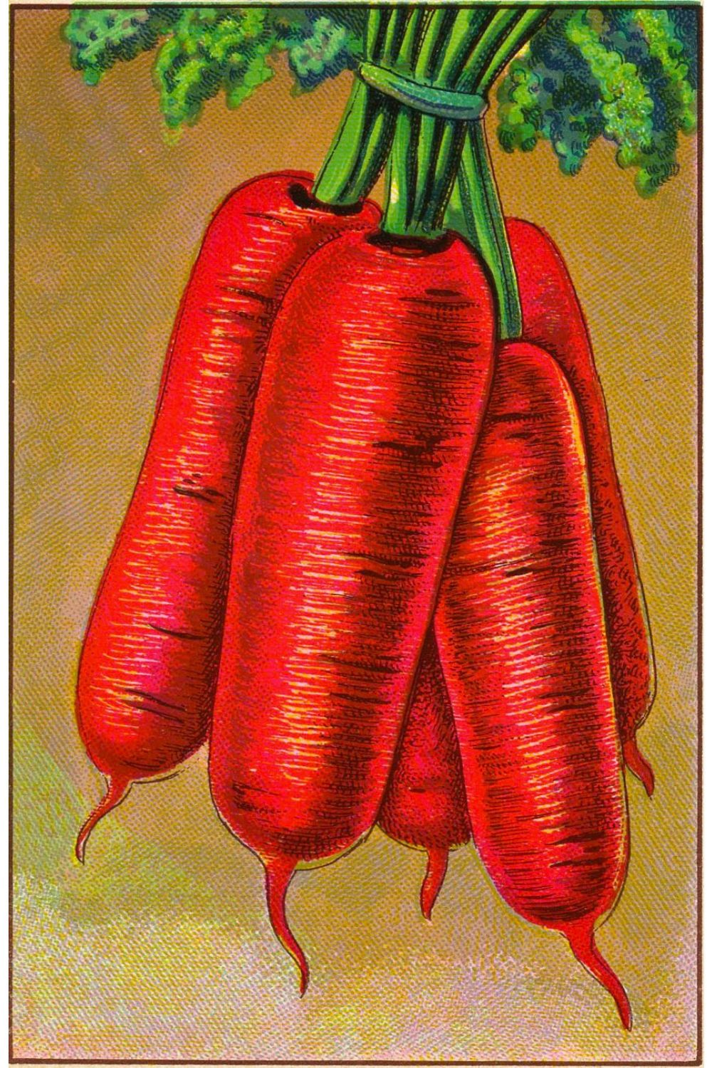 Big Carrots Canvas