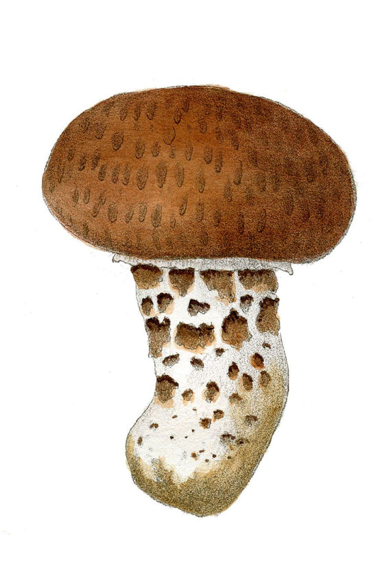 Brown and White Mushroom Canvas