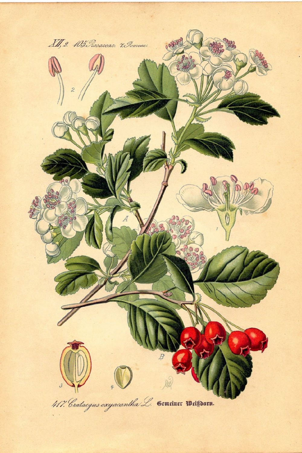 Botanical Berry Canvas
