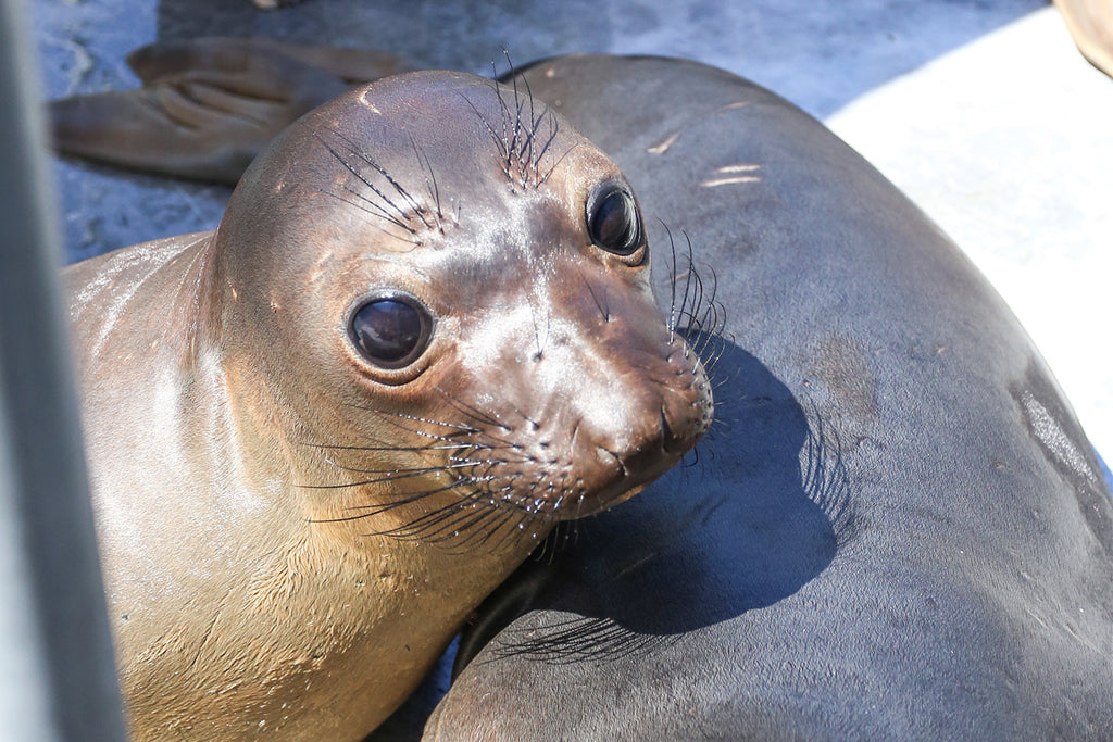 Giving Back: Spotlight with the Pacific Marine Mammal Center