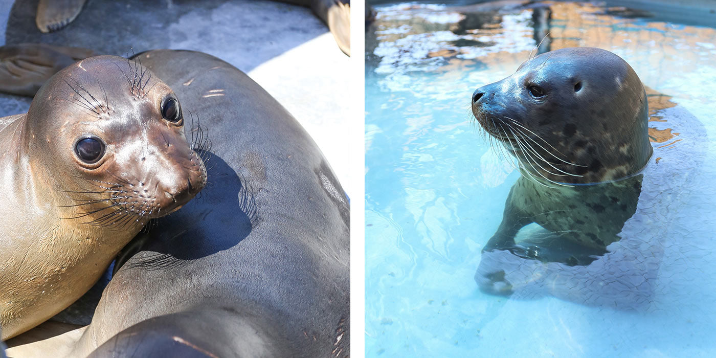 Giving back to Pacific Marine Mammal Center