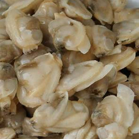Baby Clam Meat (3 x 240 gram portions)