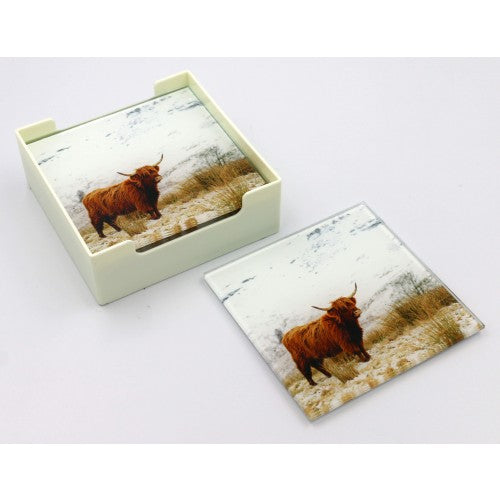 Glass Coasters - Bovine Side View Colour