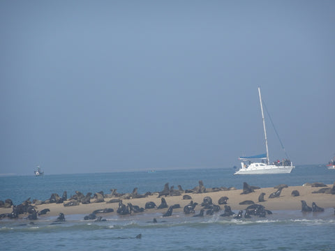 Seal colony at Cape Cross