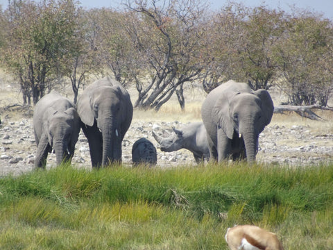 Elephant family and friend - can you spot the rhino?