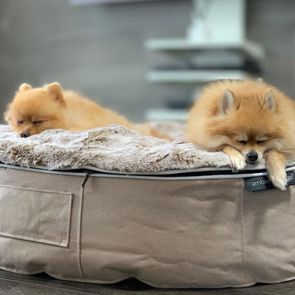 (M) Premium Indoor/Outdoor Pet Bed (Cappuccino)