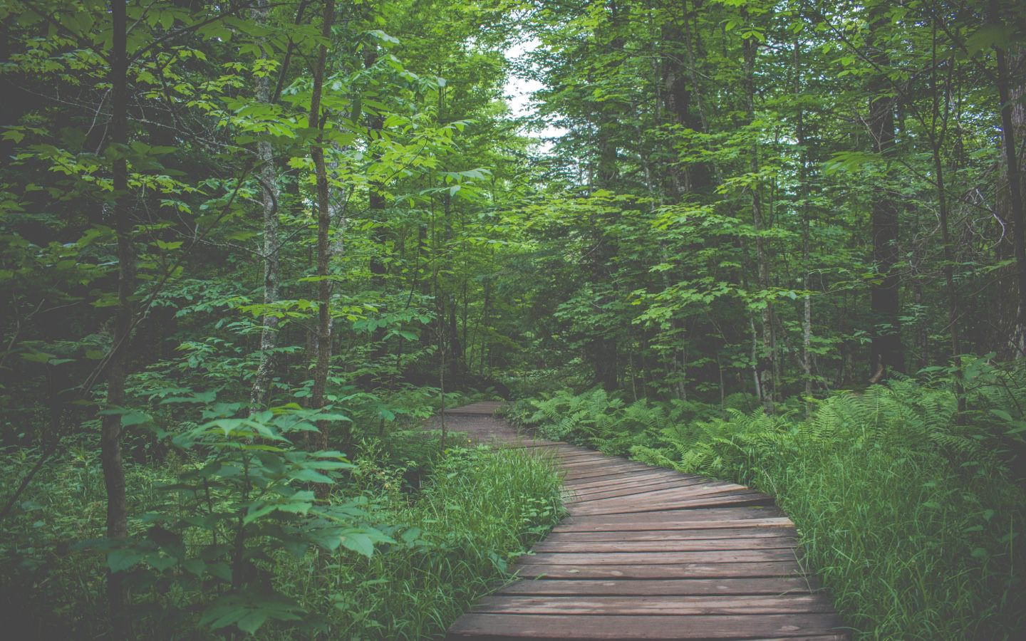 Nature, Hiking, Explore, Forest Bathing