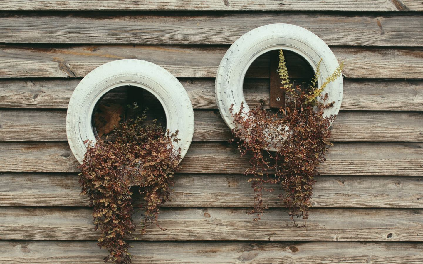 Upcycling, Recycling, Plants