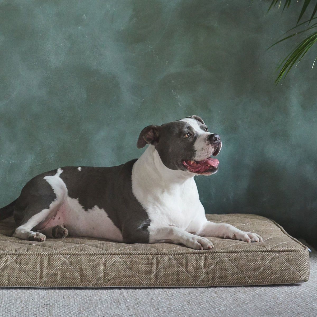 Brentwood Home Griffith Dog Bed