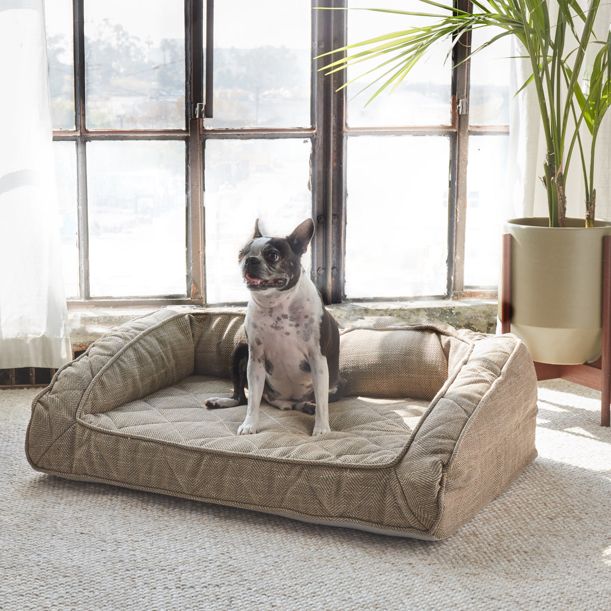 Runyon Dog Bed Replacement Cover