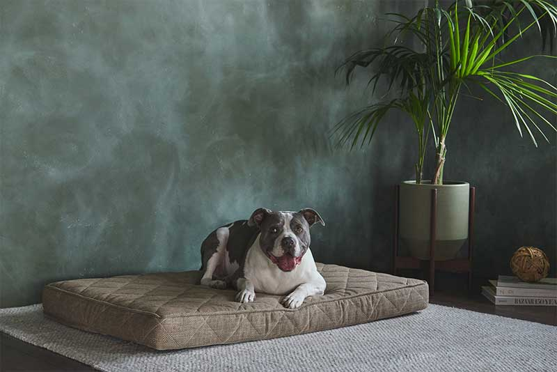 Griffith Pet Bed Pet Friendly Non-toxic Materials