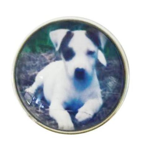 Jack Russell Terrier Snap