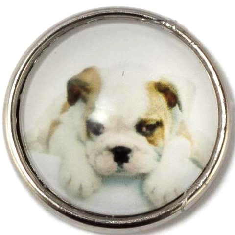 White Bulldog Snap - Gracie Roze
