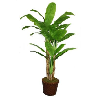 77 in. Tall Banana Tree with Real Touch Leaves in 17 in. Fiberstone Planter