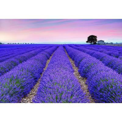 72.5 in. H x 196 in. W Provence Wall Mural