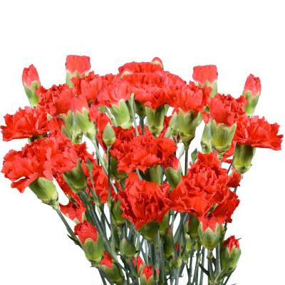 Red Mini Carnations (160 Stems - 640 Blooms) Includes Free Shipping