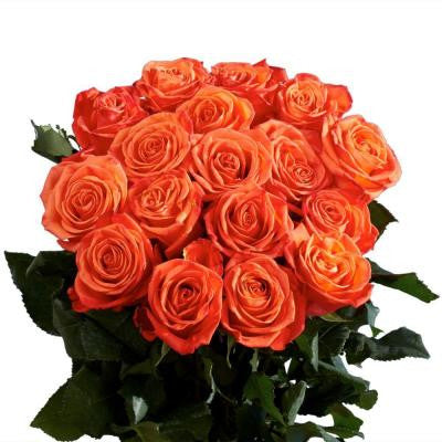 Wholesale Orange Roses (75 Extra Long Stems) Includes Free Shipping