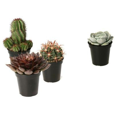 Assorted 3.5 in. Cactus and Succulents Plants (3-Pack + 1 Free)