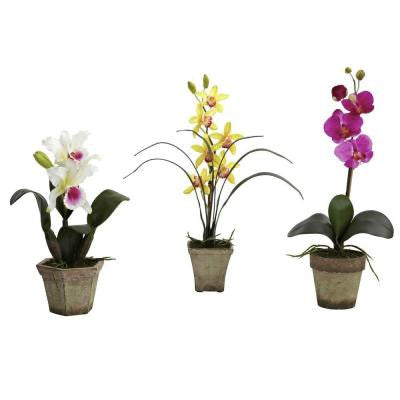 Potted Orchid Mix in White/Yellow/Purple (Set of 3)