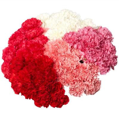 Carnation Flowers (200 Stems) Free Delivery for Mother's Day