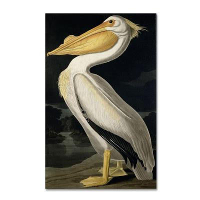 24 in. x 16 in. American White Pelican Canvas Art
