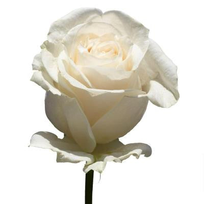 White Rose Mother's Day Flowers with Free Delivery (100 Stems)