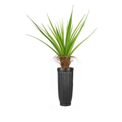 65 in. Tall Agave Tree with Cocoa Skin in Planter