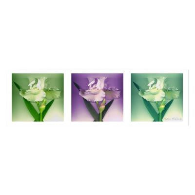 8 in. x 24 in. Three White Iris Canvas Art