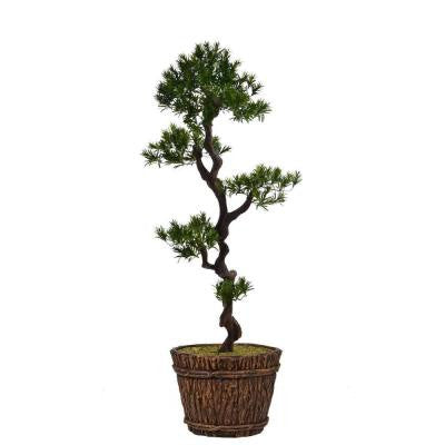 56 in. Tall Yacca Tree in Planter