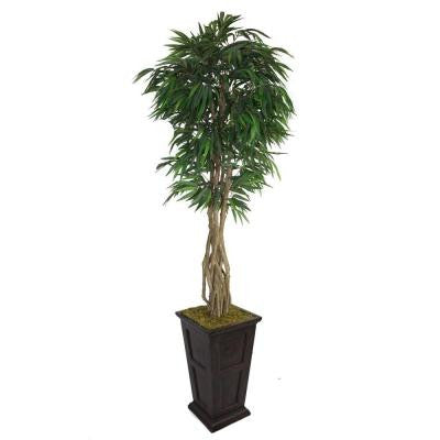 97 in. Tall Willow Ficus with Multiple Trunks in 16 in. Fiberstone Planter