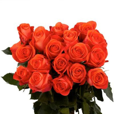 Salmon Color Roses (100 Stems) Includes Free Shipping