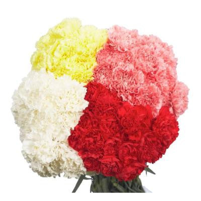 Carnations - Mother's Day Flowers (100 Stems) Free Delivery