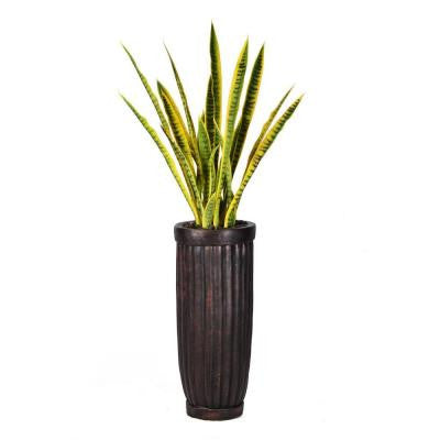 56 in. Tall Snake Plant in Planter