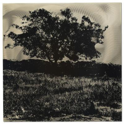 Brevium 22 in. x 22 in. Tree Black and White Metal Wall Art