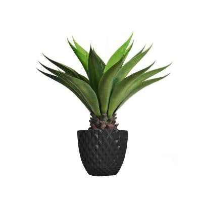 38 in. Tall Giant Aloe in Planter