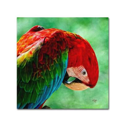35 in. x 35 in. Colorful Macaw Square Format Canvas Art