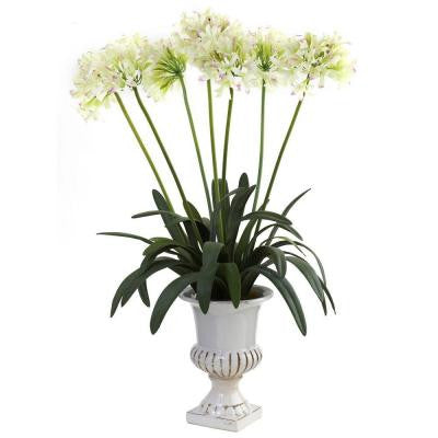 African Lily with Urn in White
