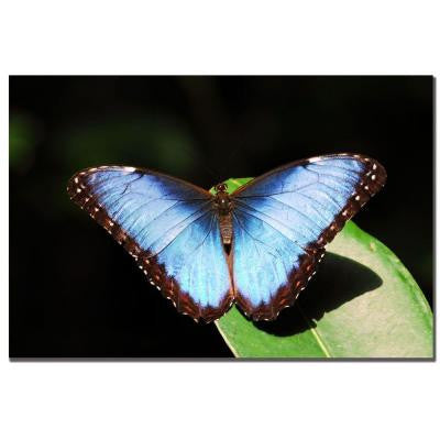 24 in. x 16 in. Blue Morpho Canvas Art